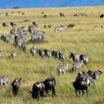 Appello dell'Unesco all'Africa