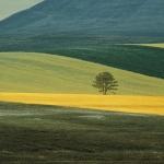Franco Fontana – Full color