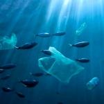 Vivere a plastica zero (o quasi)