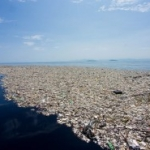 Vuoi rallentare la crisi climatica? Non utilizzare materie plastiche monouso. di Annie Leonard