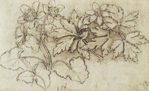 2-botanica-leonardo