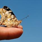 2010 anno della biodiversità