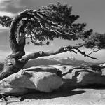 La mostra fotografica di  Ansel Adams