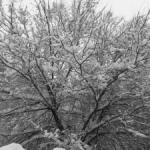 La neve d'inverno!